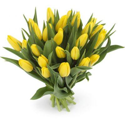 Gele tulpen groot