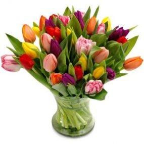 Kleurrijke tulpen extra groot