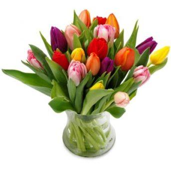 Kleurrijke tulpen groot