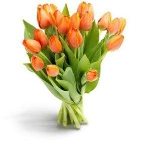 Oranje tulpen groot