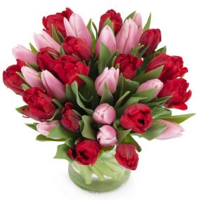 Rode met roze tulpen extra groot