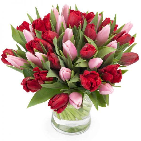 Rode met roze tulpen groot