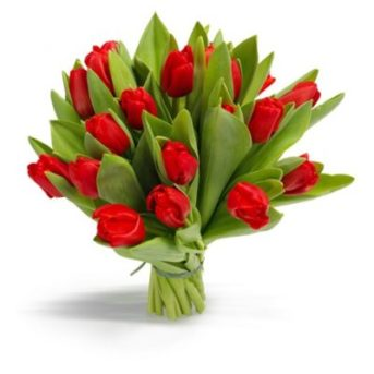 Rode tulpen groot