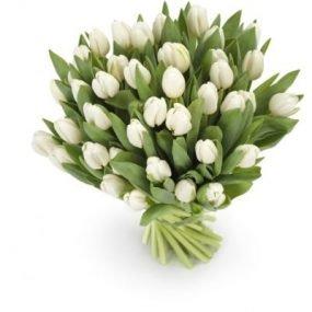 Witte tulpen extra groot