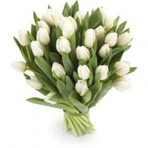 Witte tulpen groot