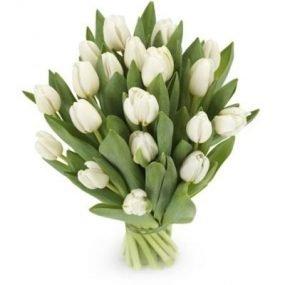 Witte tulpen klein